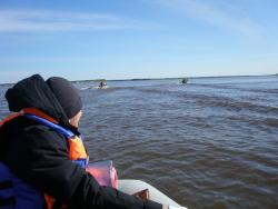Грозит ли Сургуту и району подтопление? Уровень воды в Оби поднялся вдвое